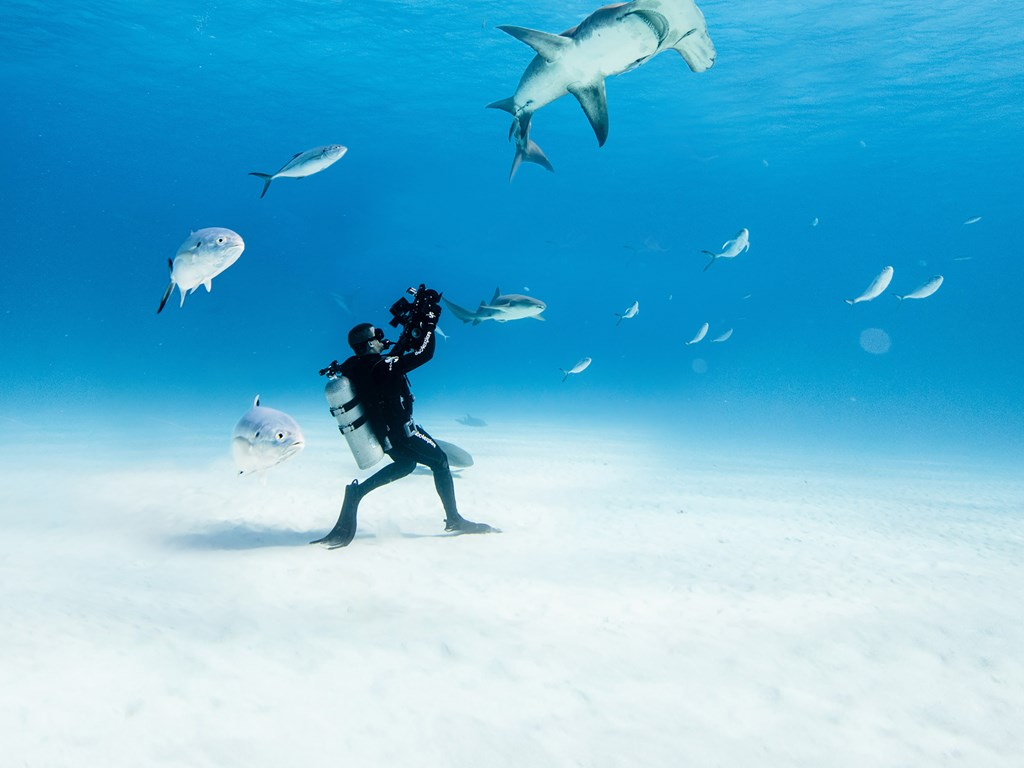 Image taken by Emma Casagrande for Ocean Film Festival World Tour 2021. Image shows an underwater photographer standing on the ocean floor surrounded by fish, and taking a photograph of a shark swimming above him.